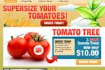 Tomato Giant – Free 3 Hybrid Tomatoes Thumbnail